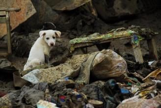 A dog left in the Philipiines' ruins