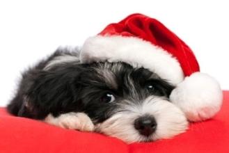 holiday xmas dog