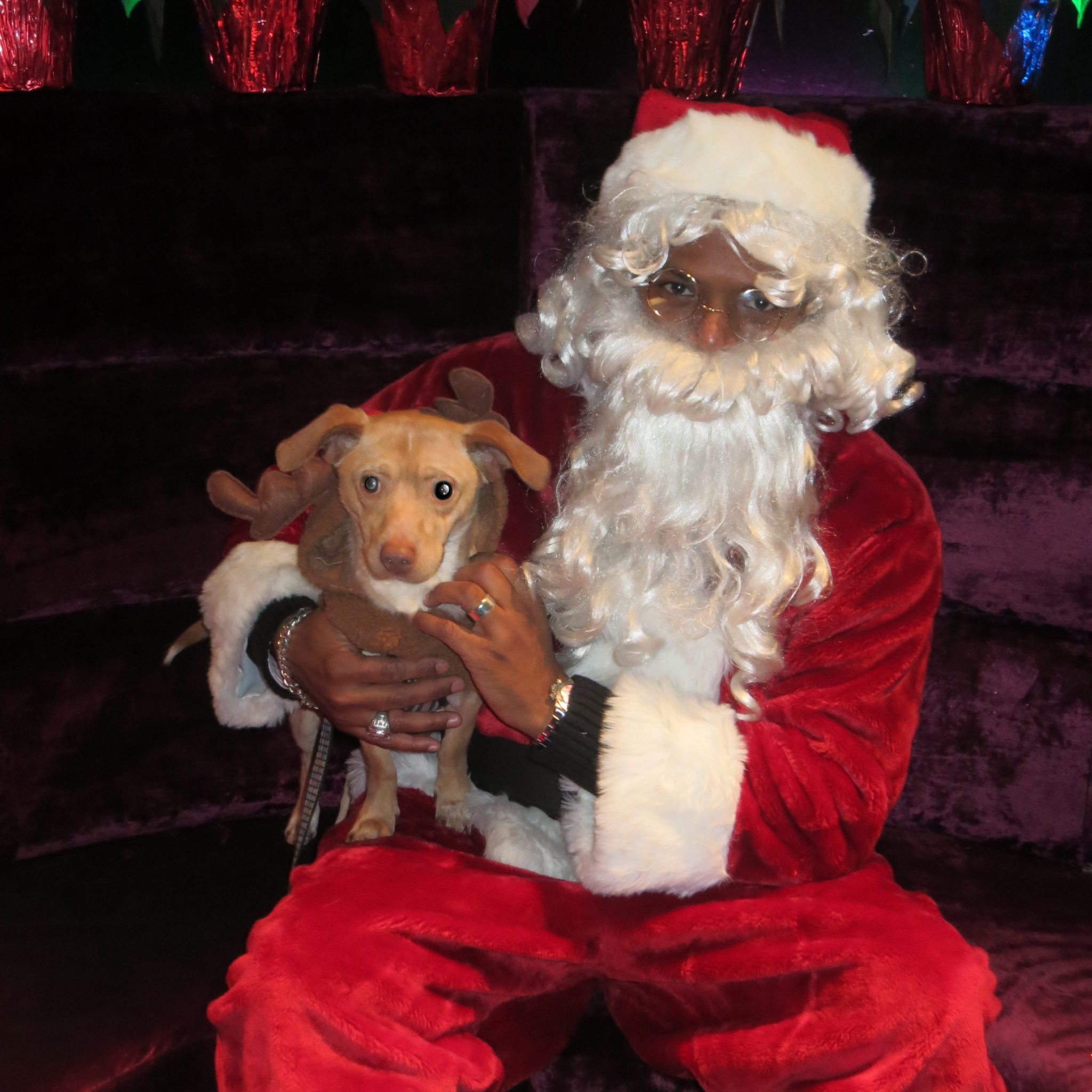 Who Let The Dogs Out – Santa! Our 10th Annual Toys For Dogs Raised Over $10,000!