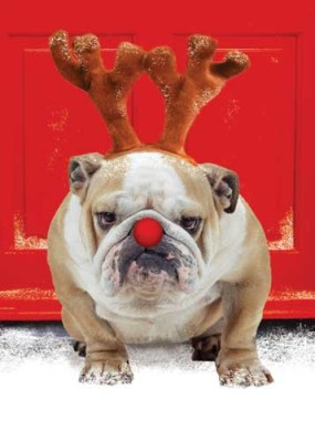 christmas-dog bulldog