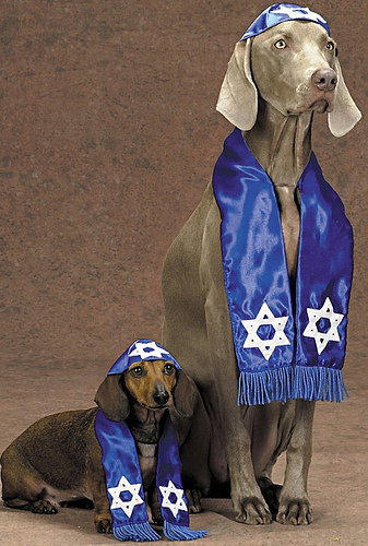 PEACEful Humor –  Israeli Dogs VS Arab Dogs!