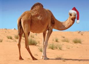 xmas_camel