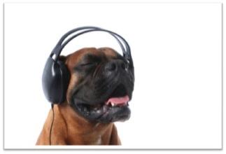 DogTalk2