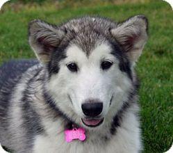 I'd love to meet ya, Mesha, from Moonsong Malamute Rescue, in Boise, ID.