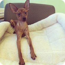 Ava from the Humane Society in New York, NY!