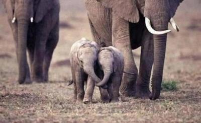 Elephant friends!