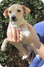 Carney from Tony La Russa's Animal Rescue Foundation (ARF) in Walnut Creek, CA!