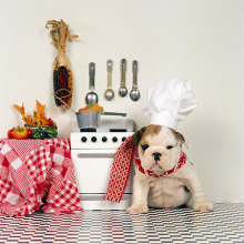 puppy in kitchen