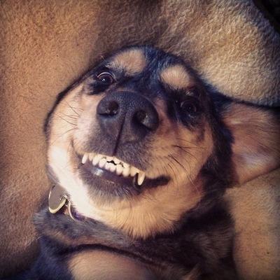 What big teeth tumblr's avtotheism's pup has!