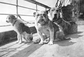 Titanic Survivor Dogs