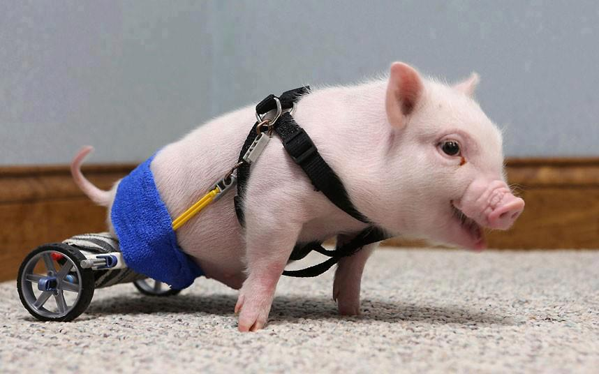 Happy Specially-Abled Pets Day! Be Someone's Hero Today!