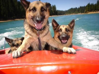 boating-safety-for-pets