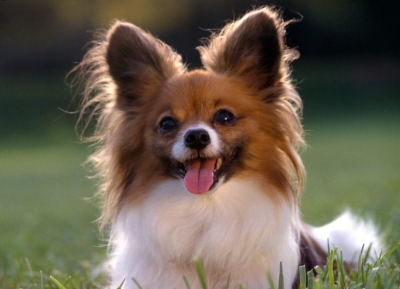 cute-puppies-dogs21