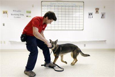 Cancer Sniffing Dog