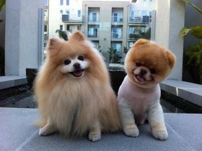 puppy-pics36
