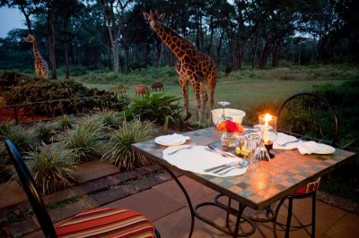 romantic-dinners-are-also-served-al-fresco-1