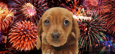 1349440791Fireworks-And-Dogs