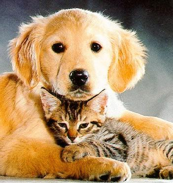 Cute-cat-and-dog
