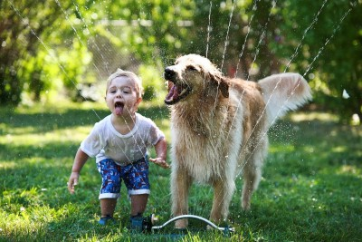 Golden-and-boy-in-sprinkler