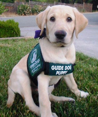 guide dog training:
