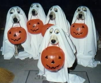 HalloweenDogs02