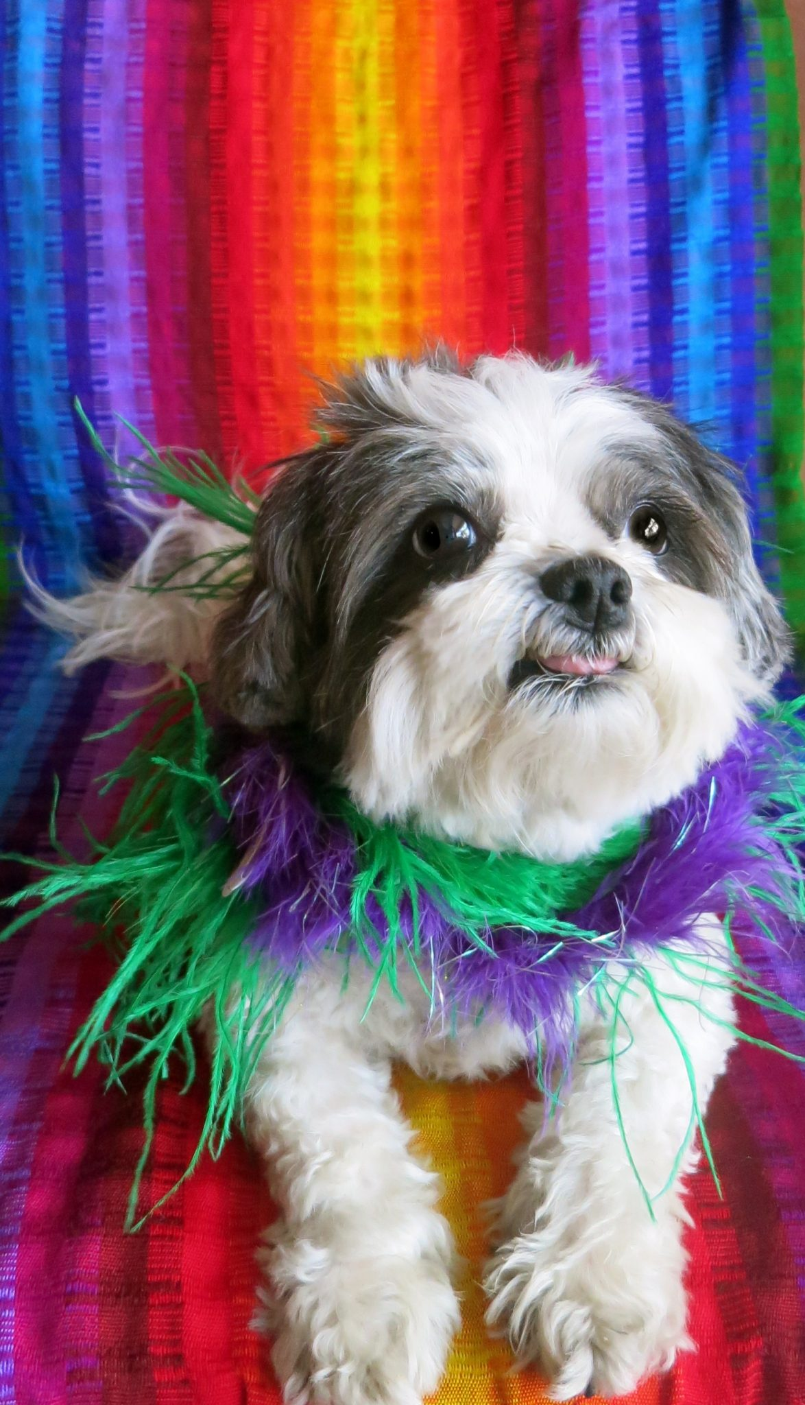 HAPPY GAY PRIDE! Dogs Love Unconditionally!  Dogs Don't Discriminate!