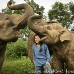 Join Us To Help Save The Elephants Of Thailand!