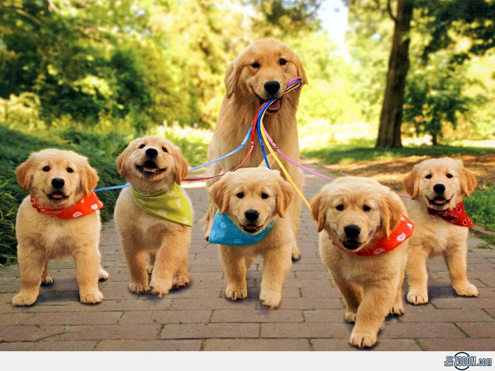 Important Lessons To Learn For A Life Of Puppy Love Animal Fair