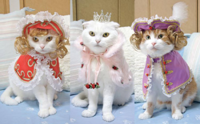 kitties dress up