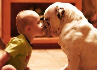 bulldog-kissing-baby
