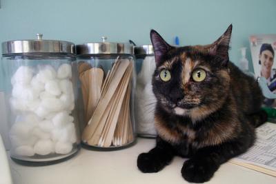 cat-emergency