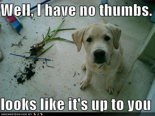 If Pets Had Opposable Thumbs Day… Yes, It's a Real Thing!