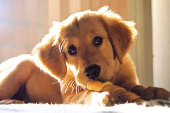 dog-biscuit-recipes