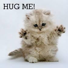 kitten hug me