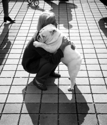 gjtqx-english-bulldog-hug