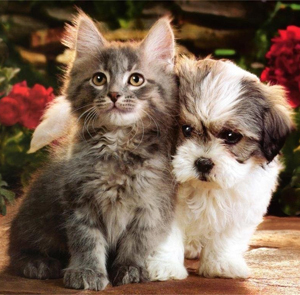 kitten-and-puppy
