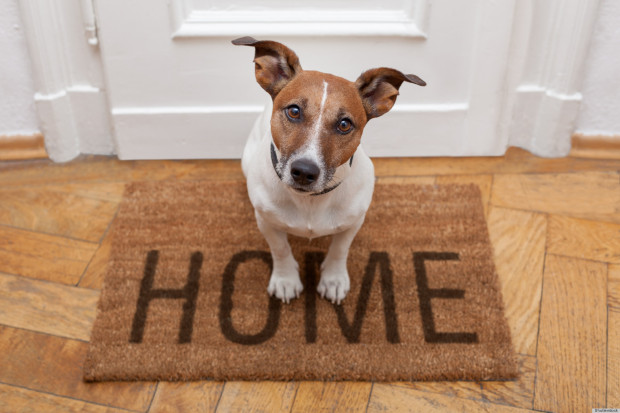Put Your Best Paw Forward – International Homeless Animals Day!