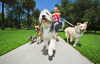 Give your pets a treat and take them to a new place where they can explore and run about!