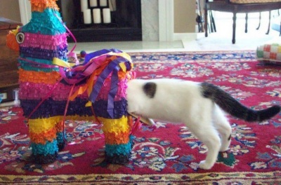 cat piñata on head