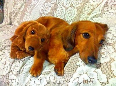 10.1.14-Doggie-Doppelgangers3