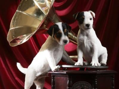 3400-chiens-musique-WallFizz