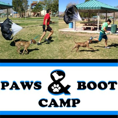 PawsBootcamp_pic_sized