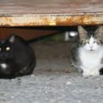 Black & Orange: Stop Kitty Overpopulation!