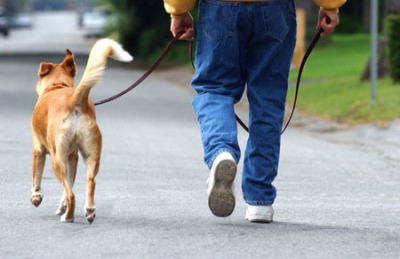 A daily walk may be just the therapy you both need after a long day cooped up in the house/office.