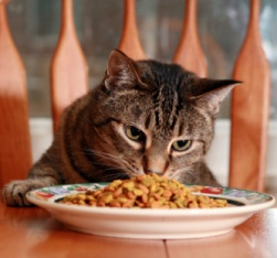 Break the routine of the everyday and treat the cat to something delicious!
