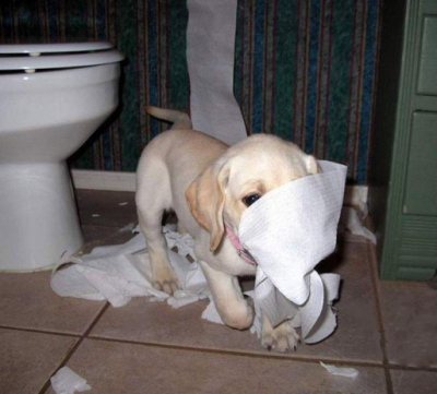 cute-toilet-paper-dog
