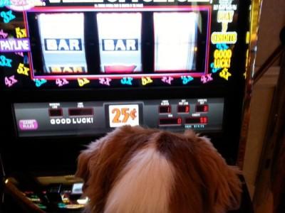 dog-friendly-casino-experience