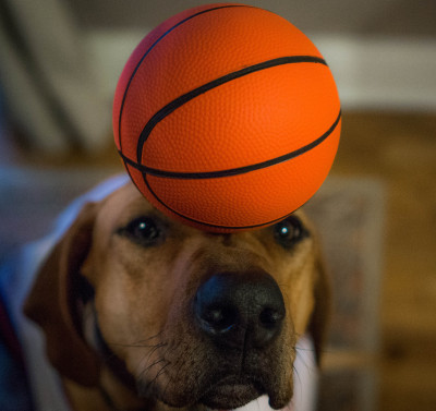 This pooch will be heading to the Harlem Globetrotters at this pace!