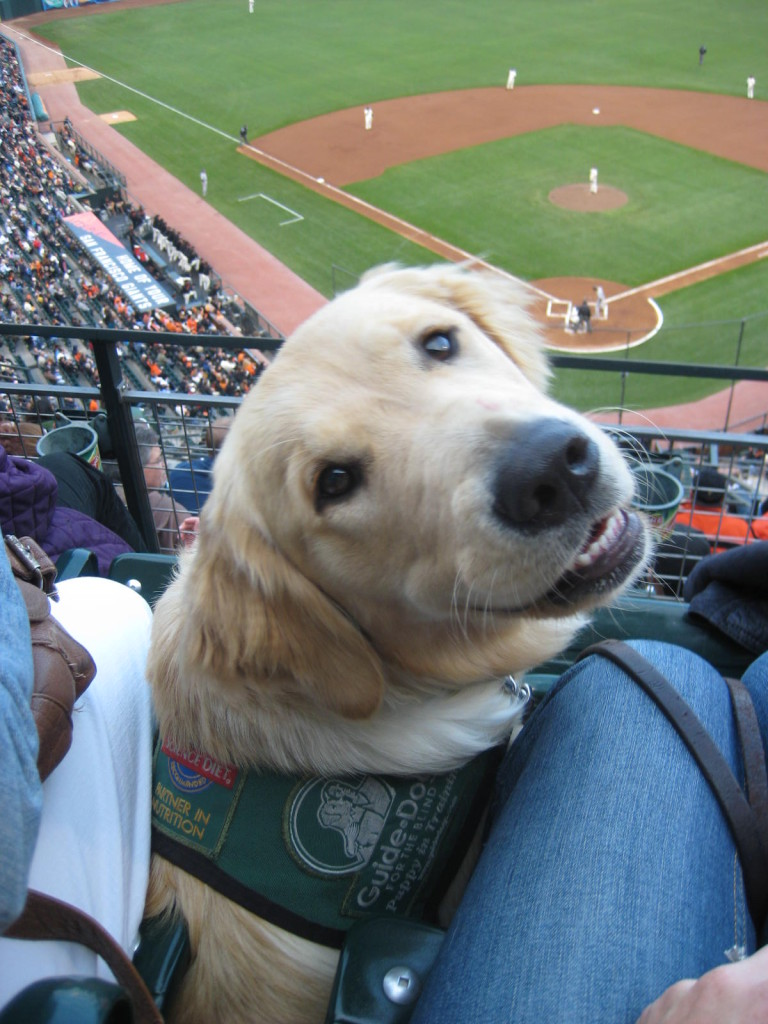 Congrats World Series #SFGiants Champs! Why You Must Watch the World Series With Your Pup!