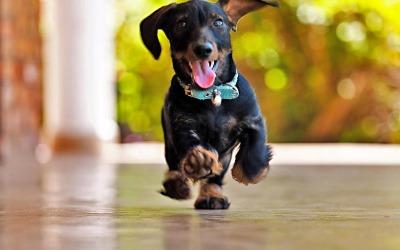 Hi human! I'm running back home!